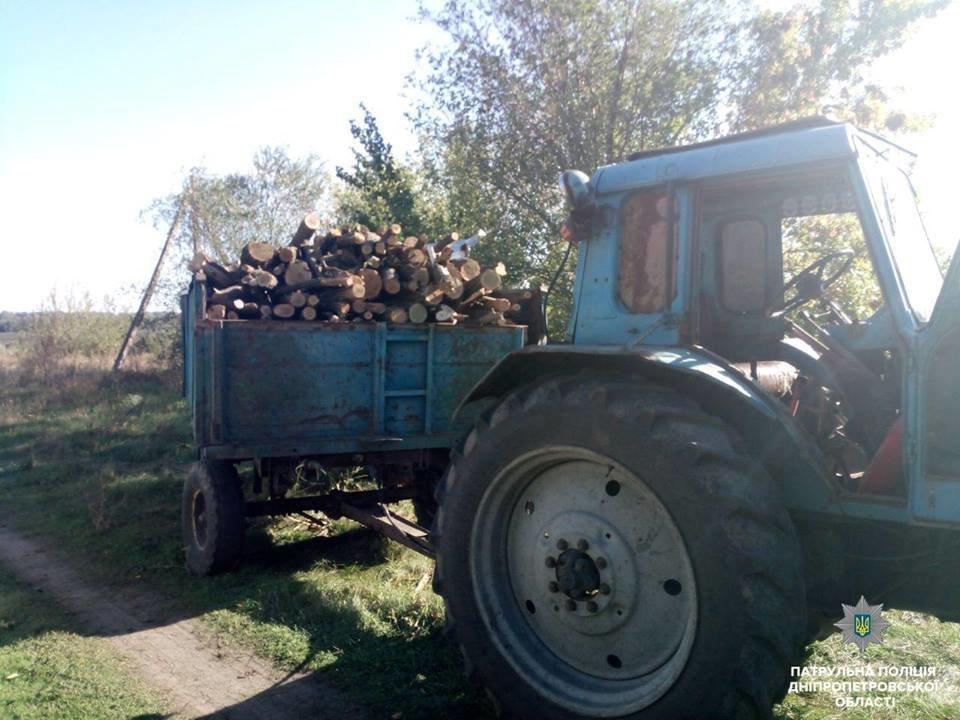 На Днепропетровщине неизвестные уничтожают лесополосу, - ФОТО, фото-3