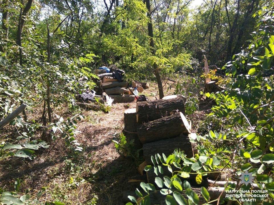 На Днепропетровщине неизвестные уничтожают лесополосу, - ФОТО, фото-4