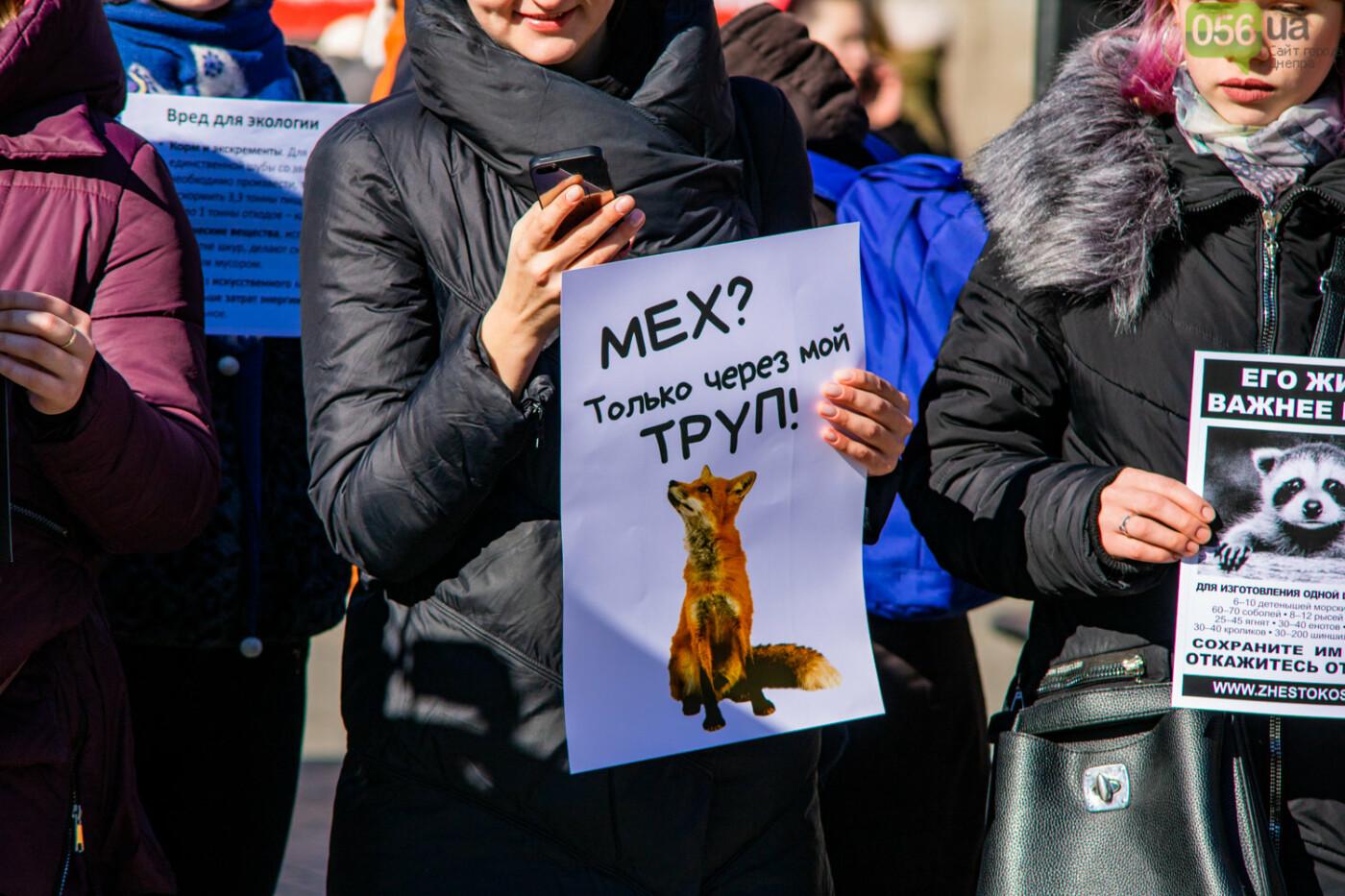 Полярная лиса, законопроект и кричащие плакаты: как в центре Днепра прошла антимеховая акция, - ФОТОРЕПОРТАЖ, ВИДЕО, фото-2