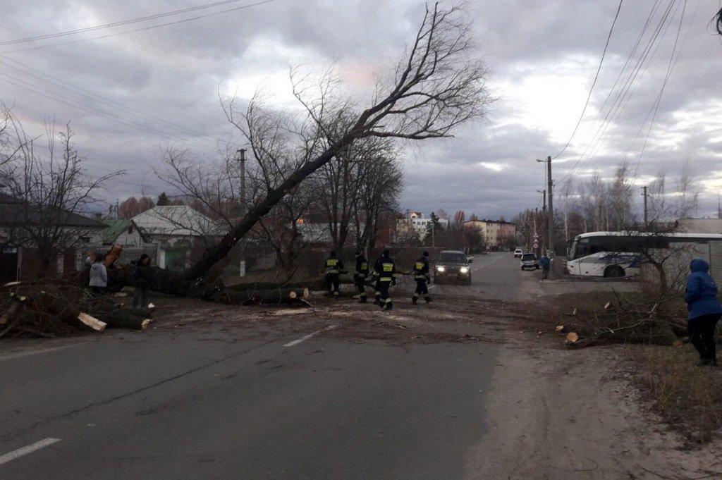 В Днепре и области из-за бури деревья падали на авто: последствия непогоды, фото-4
