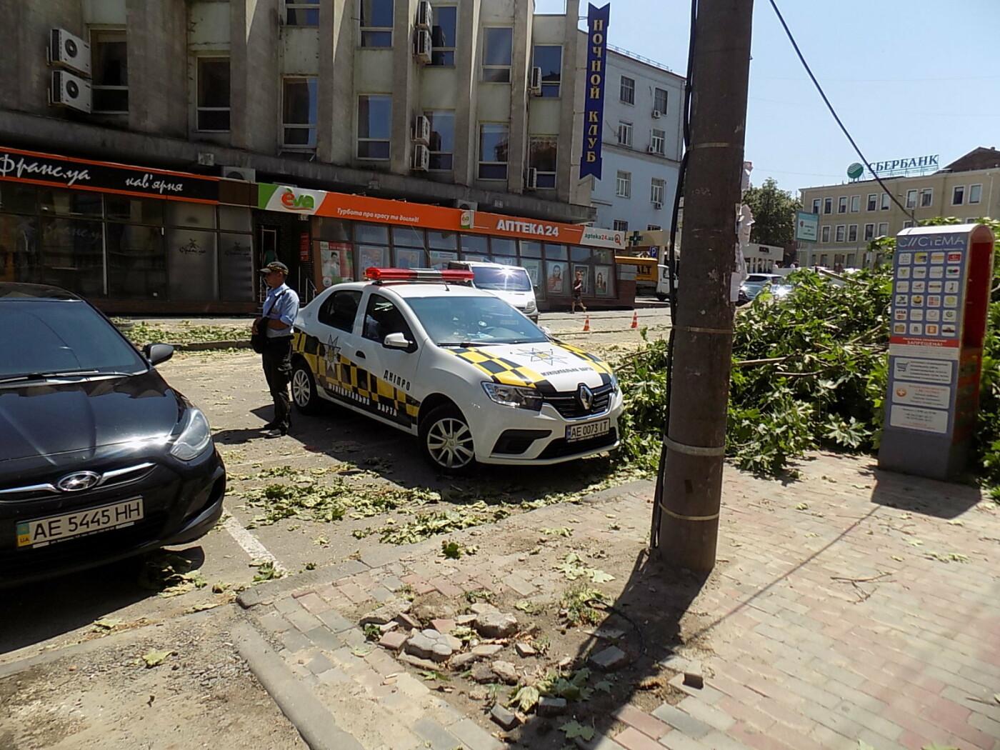 В Днепре провели «похороны» деревьев с Короленко: последние деревья срубили, пока город спал, - ФОТО, фото-4