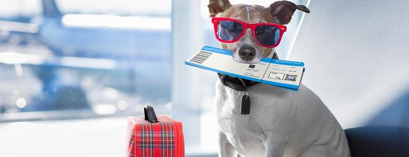 Как отправиться в путешествие из Днепра в ЕС с домашним питомцем: пошаговая инструкция и советы, - ФОТО, фото-3