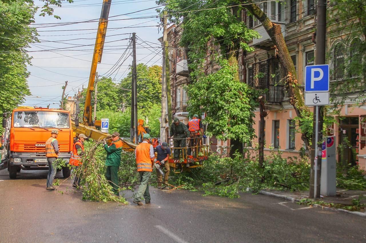 В центре Днепра продолжают убирать аварийные деревья, - ФОТО, фото-2