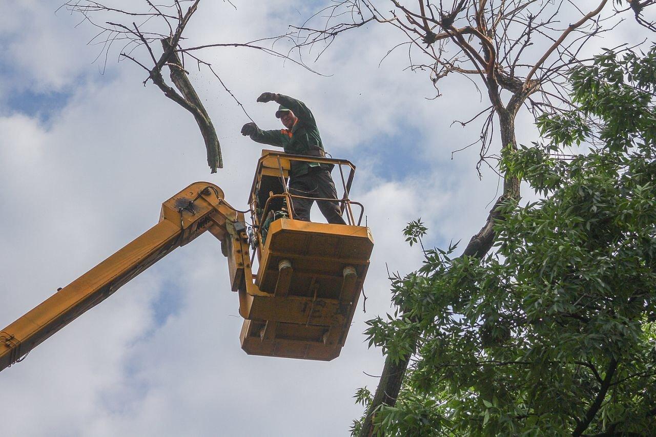 В центре Днепра продолжают убирать аварийные деревья, - ФОТО, фото-1