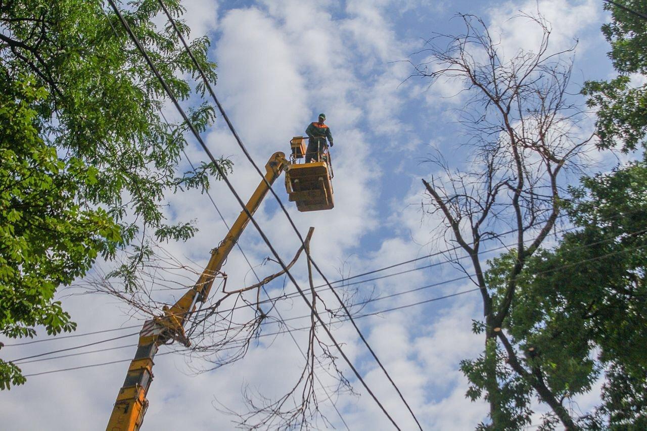 В центре Днепра продолжают убирать аварийные деревья, - ФОТО, фото-5