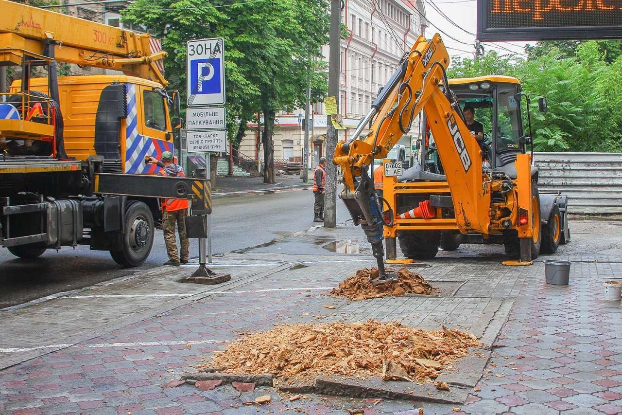 В центре Днепра продолжают убирать аварийные деревья, - ФОТО, фото-3