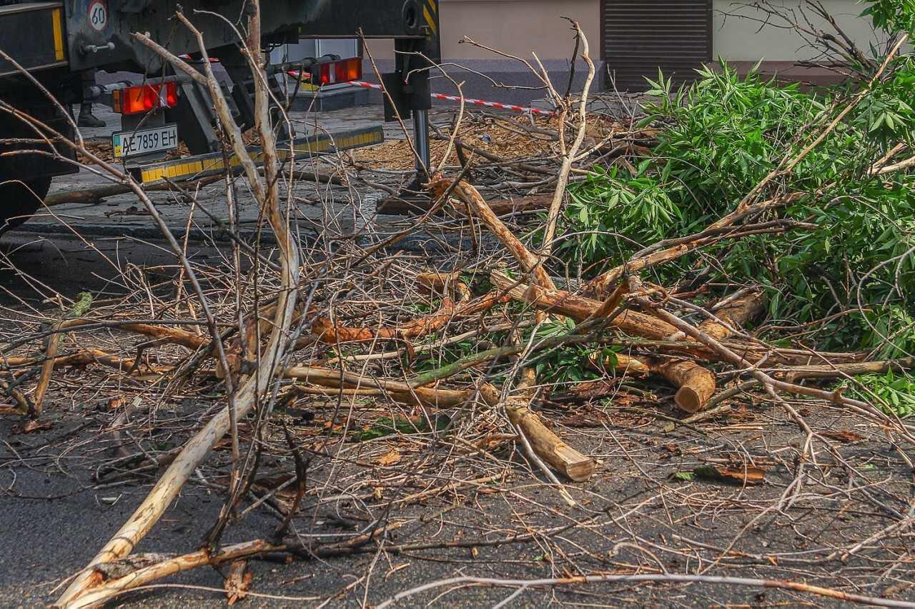 В центре Днепра продолжают убирать аварийные деревья, - ФОТО, фото-4