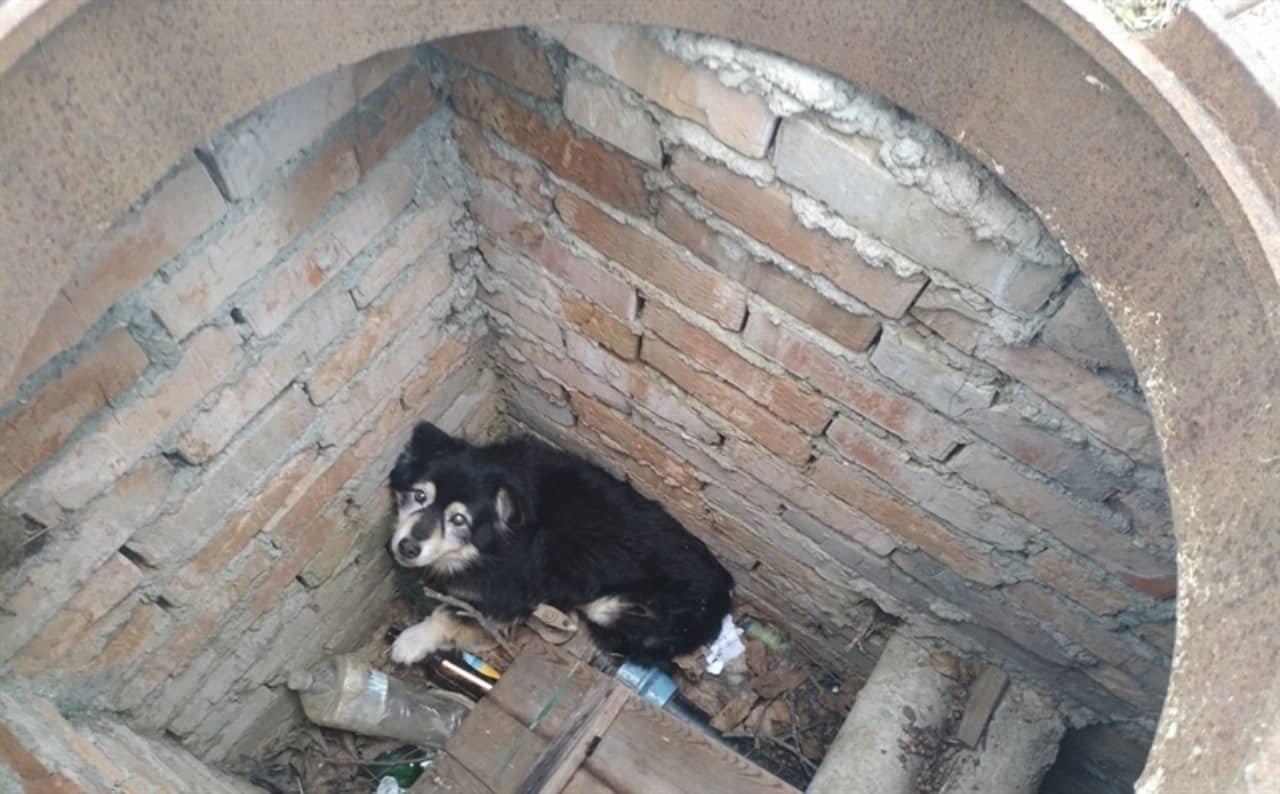 На Днепропетровщине пятеро спасателей доставали собаку из люка, - ФОТО, фото-1