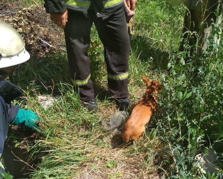 На Днепропетровщине спасли щенка, который случайно провалился в яму, - ФОТО, фото-2