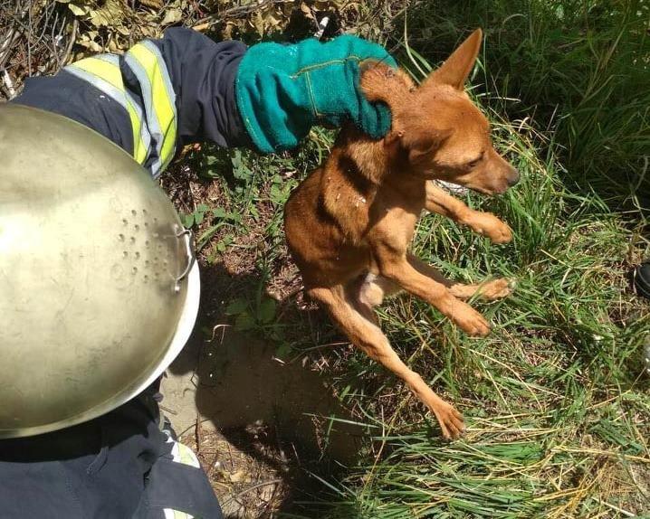 На Днепропетровщине спасли щенка, который случайно провалился в яму, - ФОТО, фото-1