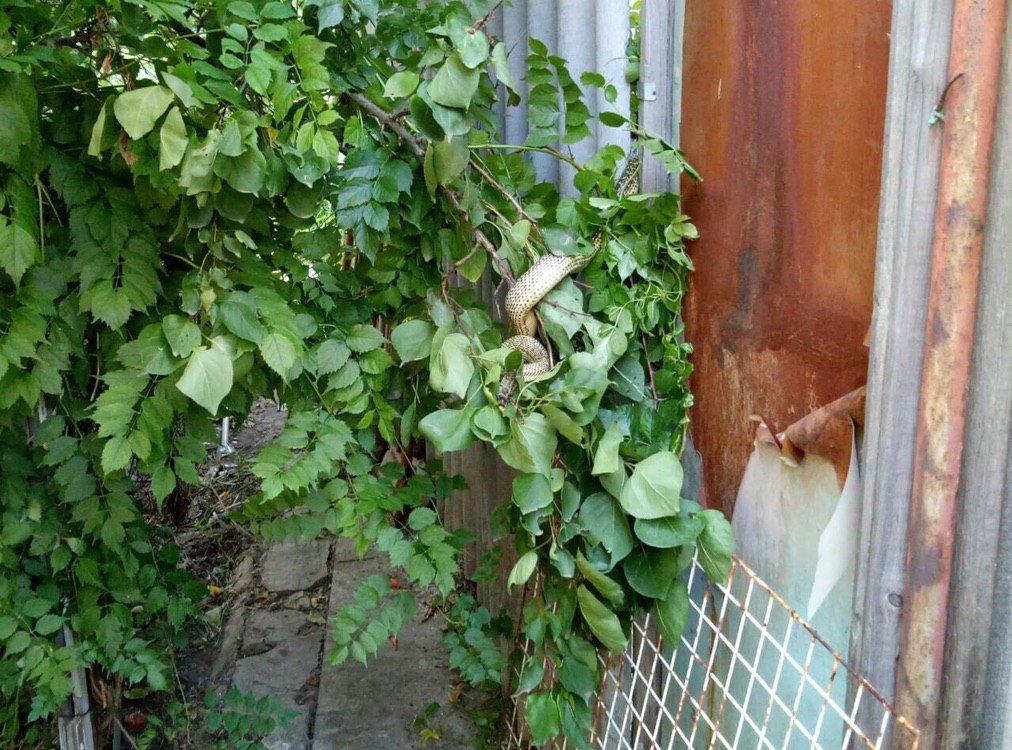 В Днепре на дереве у частного дома нашли 1,5-метровую змею, - ФОТО, ВИДЕО, фото-1