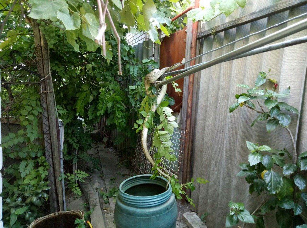 В Днепре на дереве у частного дома нашли 1,5-метровую змею, - ФОТО, ВИДЕО, фото-2
