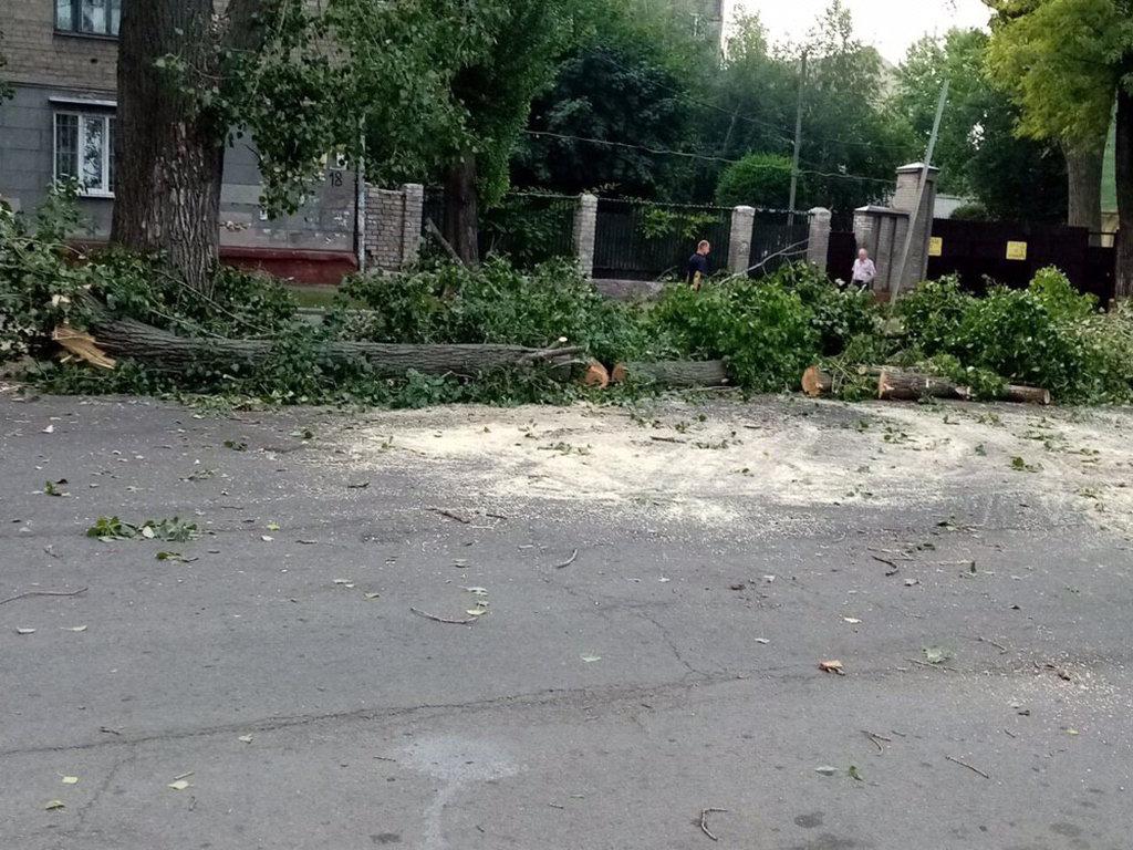 В центре Днепра огромное дерево упало на дорогу и трамвайные пути, - ФОТО, фото-2