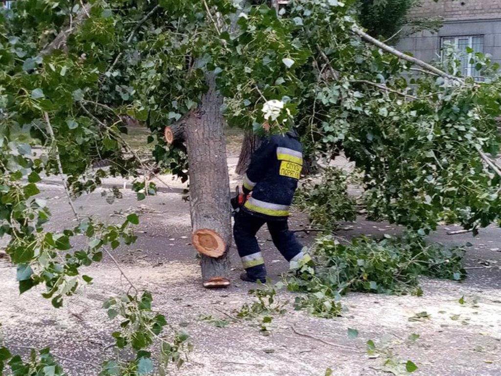 В центре Днепра огромное дерево упало на дорогу и трамвайные пути, - ФОТО, фото-1