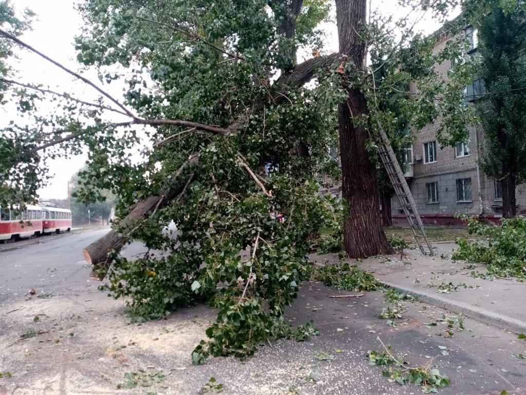 В центре Днепра огромное дерево упало на дорогу и трамвайные пути, - ФОТО, фото-3