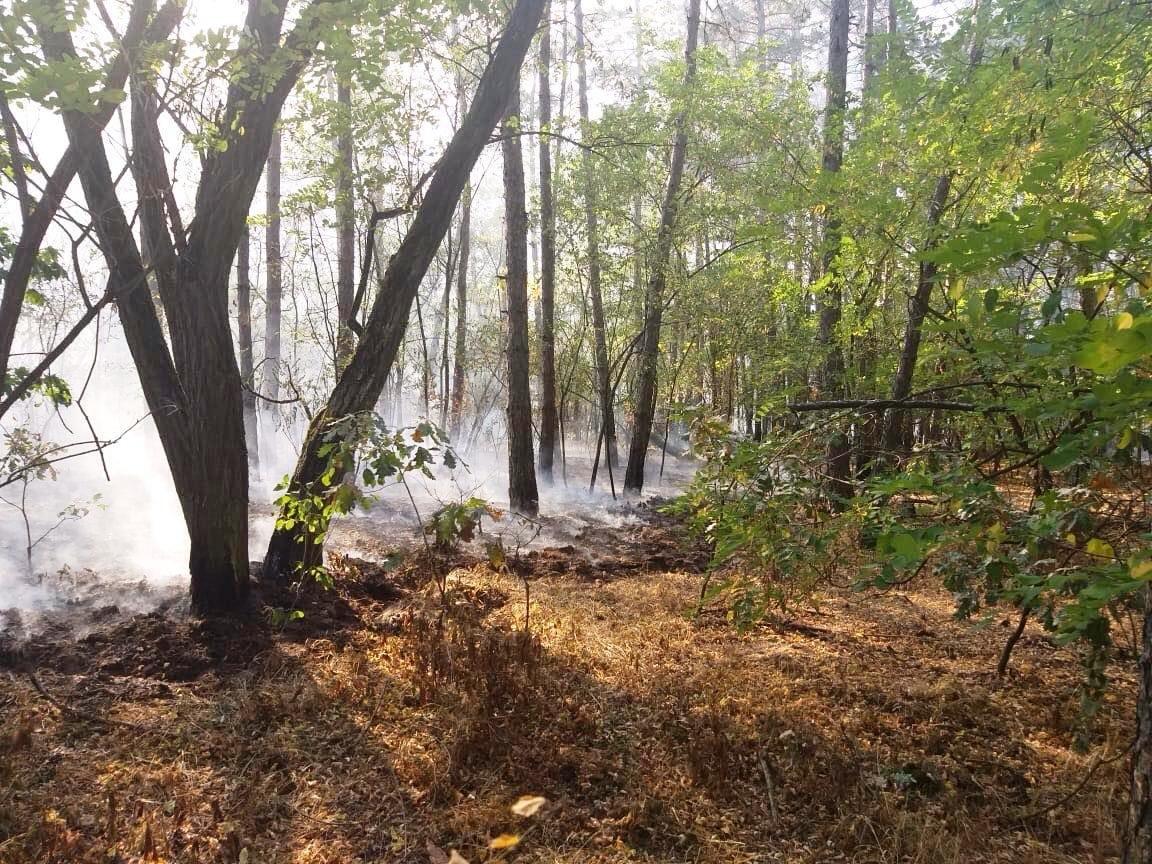 На Днепропетровщине горел лес, - ФОТО, фото-1
