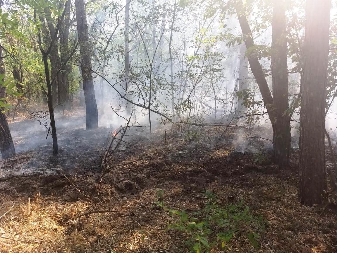 На Днепропетровщине горел лес, - ФОТО, фото-2