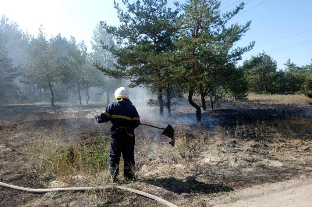 На Днепропетровщине участились пожары в лесах, - ФОТО, ВИДЕО, фото-3
