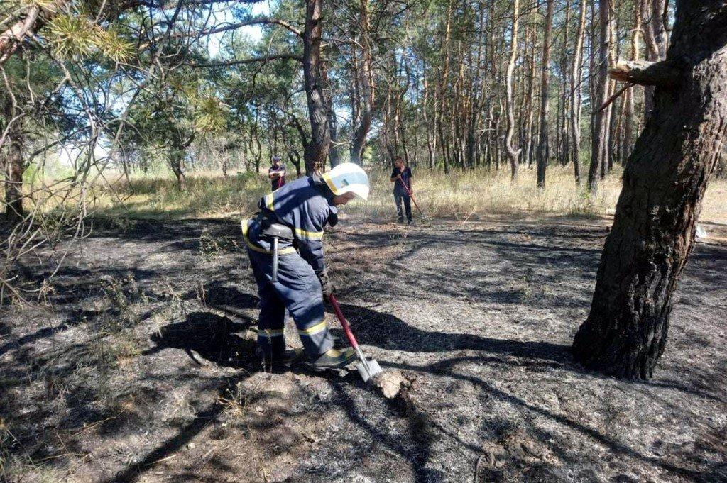На Днепропетровщине участились пожары в лесах, - ФОТО, ВИДЕО, фото-4