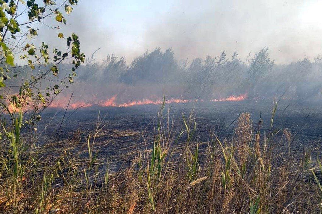 На Днепропетровщине участились пожары в лесах, - ФОТО, ВИДЕО, фото-1