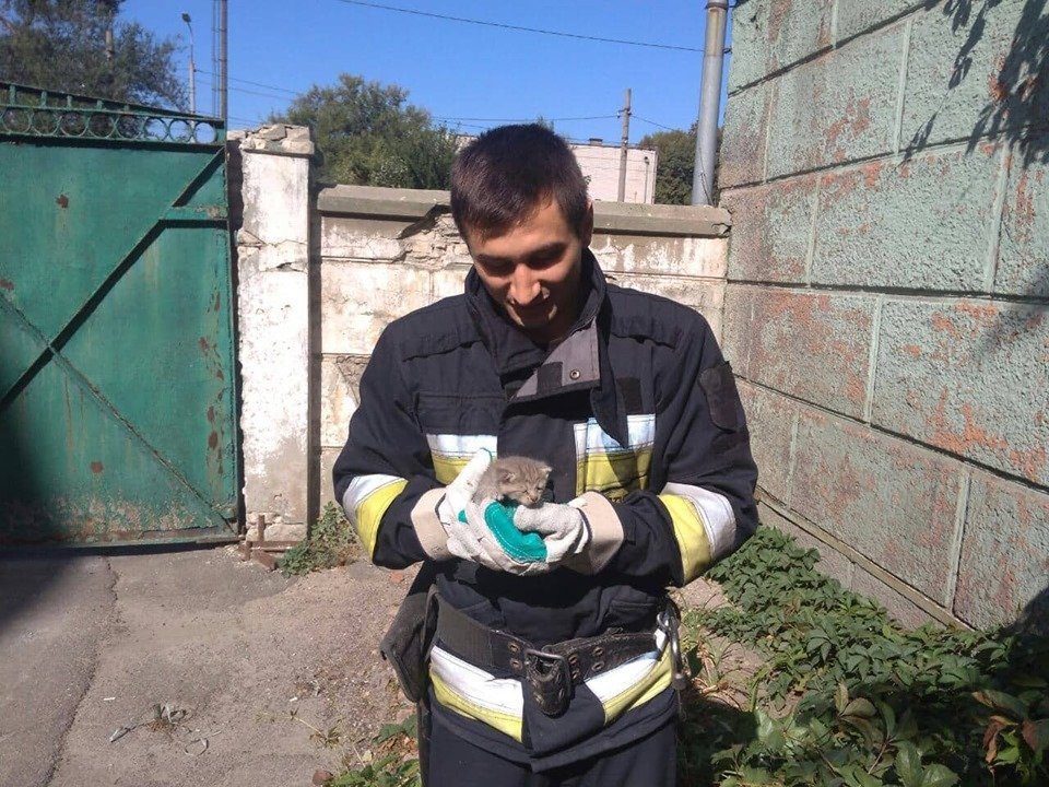 В Днепре пожарные спасли маленького котенка, - ФОТО, фото-2