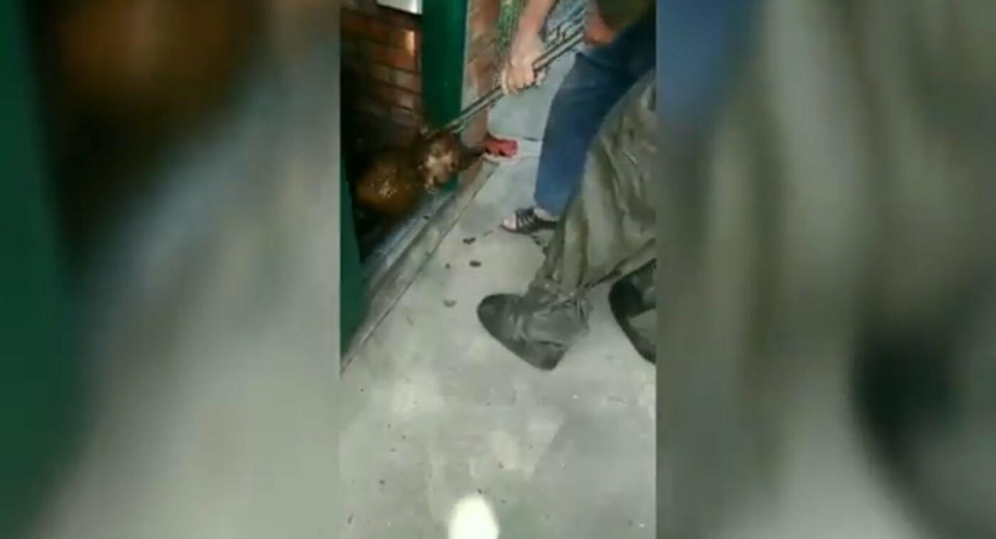 В Днепре спасатели доставали собаку из ямы в уличной уборной, - ФОТО, фото-2