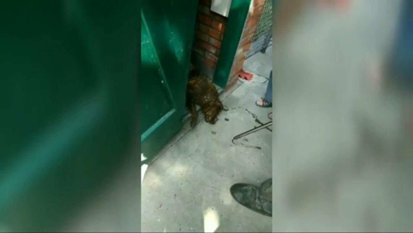 В Днепре спасатели доставали собаку из ямы в уличной уборной, - ФОТО, фото-3