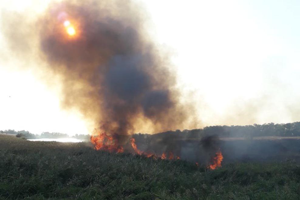 В Днепропетровской области огонь уничтожил почти 5 гектаров сухой травы, - ФОТО, фото-1