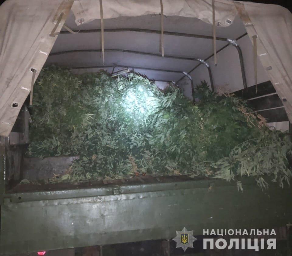 В Днепропетровской области растили трехметровую коноплю, - ФОТО, ВИДЕО, фото-3