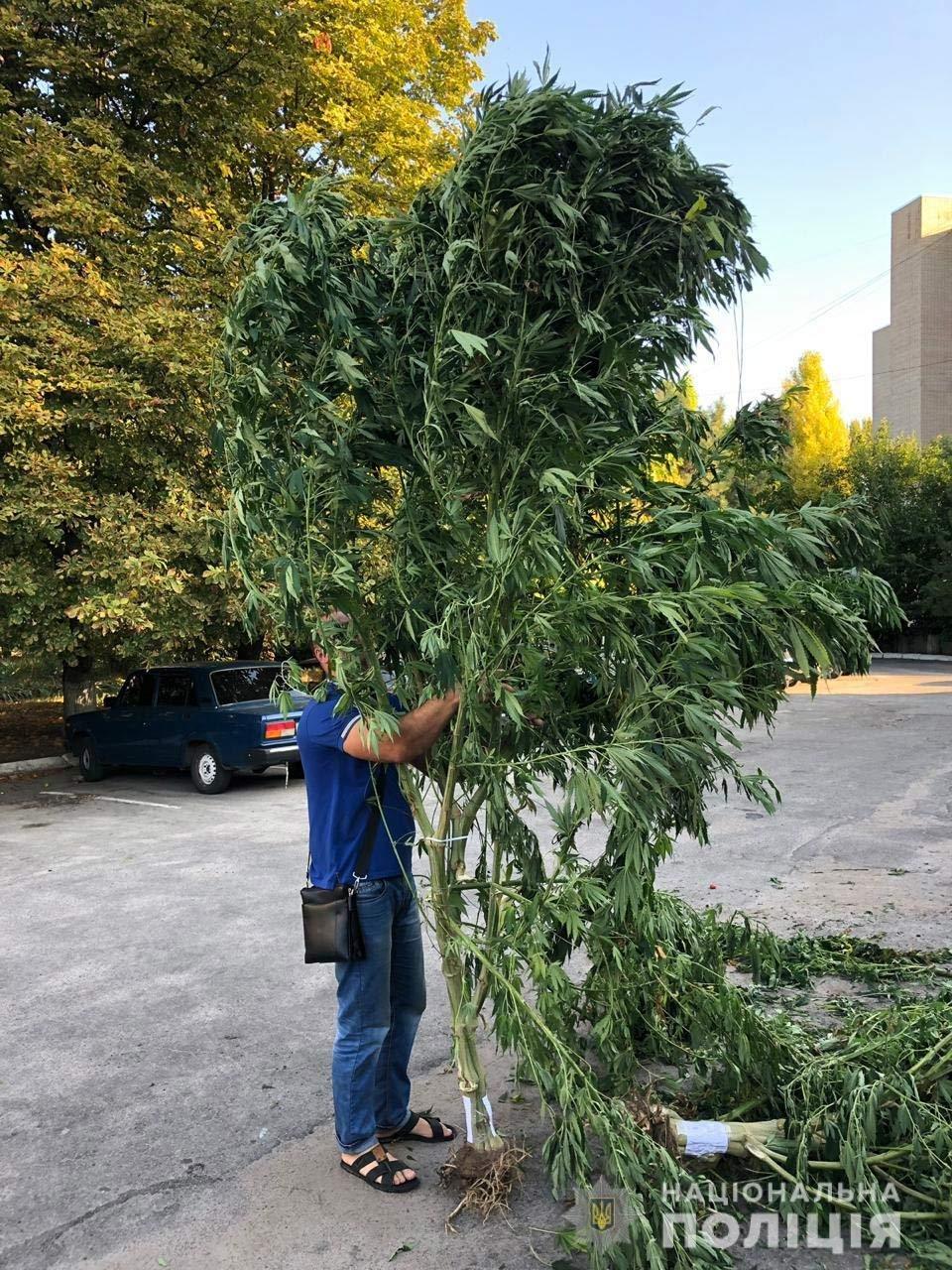 В Днепропетровской области растили трехметровую коноплю, - ФОТО, ВИДЕО, фото-1