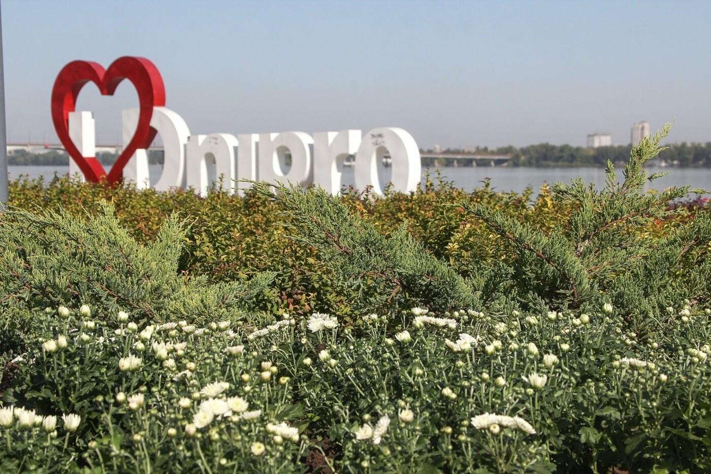 В День города в Днепре появятся тысячи клумб хризантем, - ФОТО, фото-1