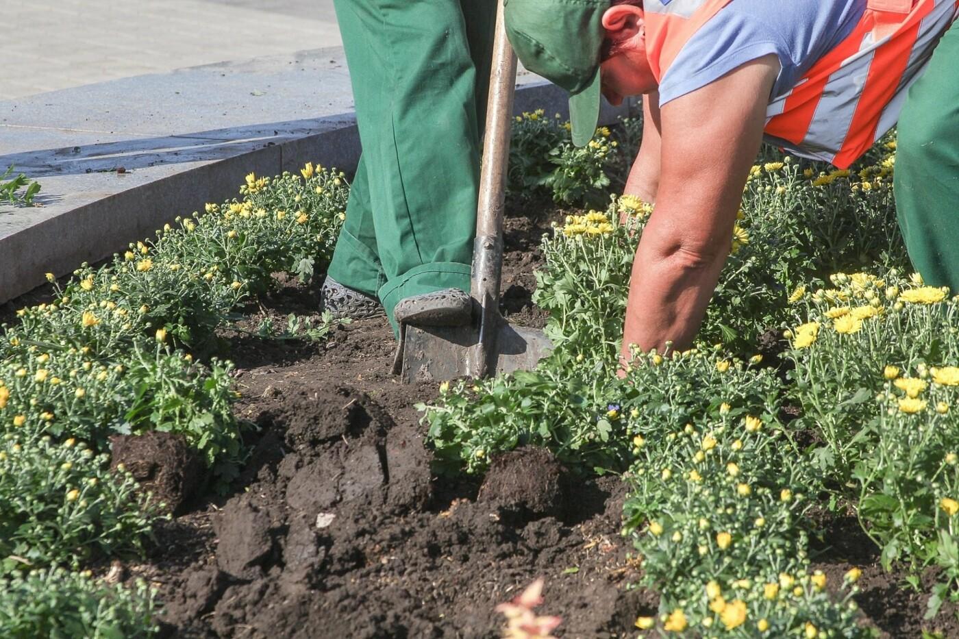 В День города в Днепре появятся тысячи клумб хризантем, - ФОТО, фото-2