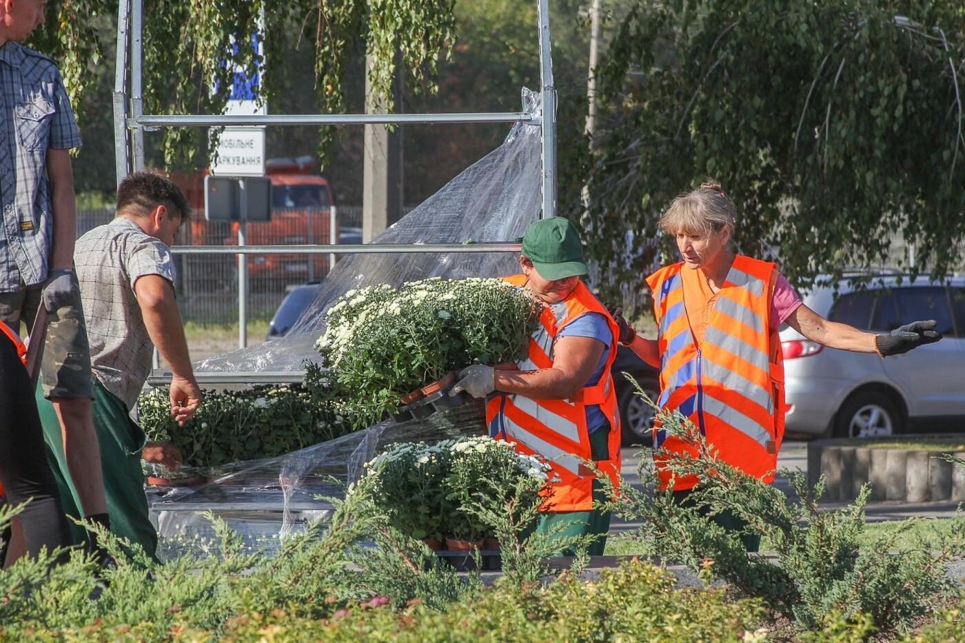В День города в Днепре появятся тысячи клумб хризантем, - ФОТО, фото-3