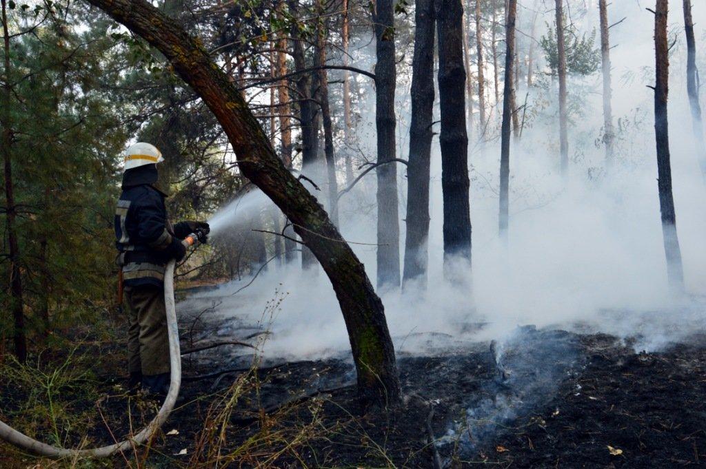 На Днепропетровщине продолжает гореть лес, - ФОТО, ВИДЕО, фото-3