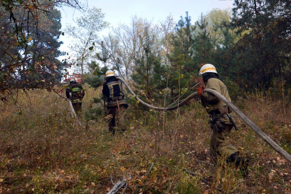 На Днепропетровщине продолжает гореть лес, - ФОТО, ВИДЕО, фото-6