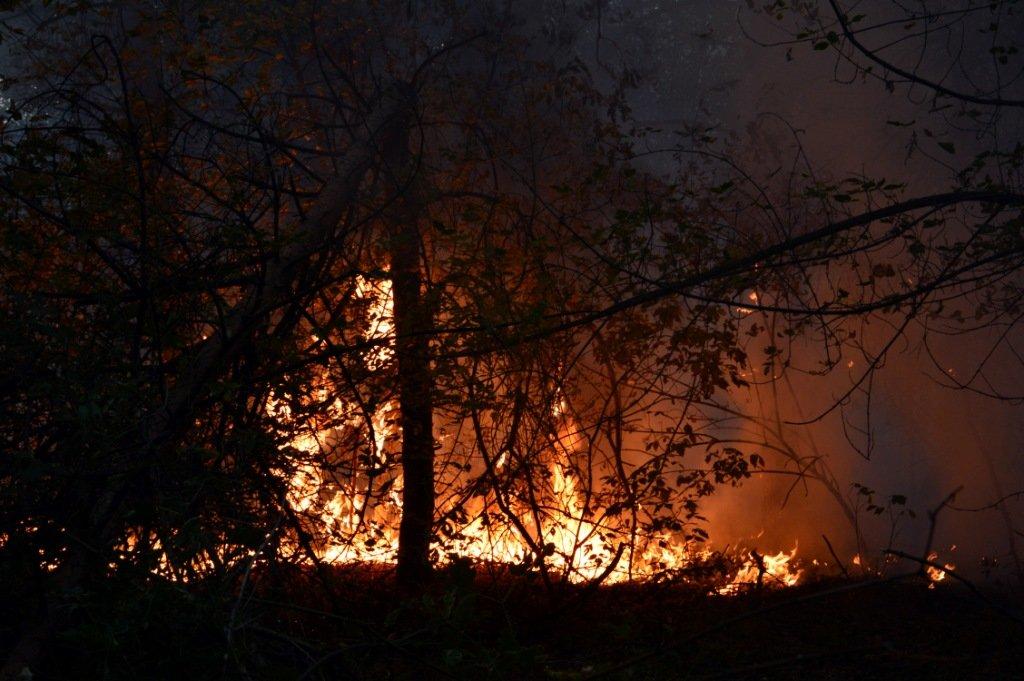На Днепропетровщине продолжает гореть лес, - ФОТО, ВИДЕО, фото-9