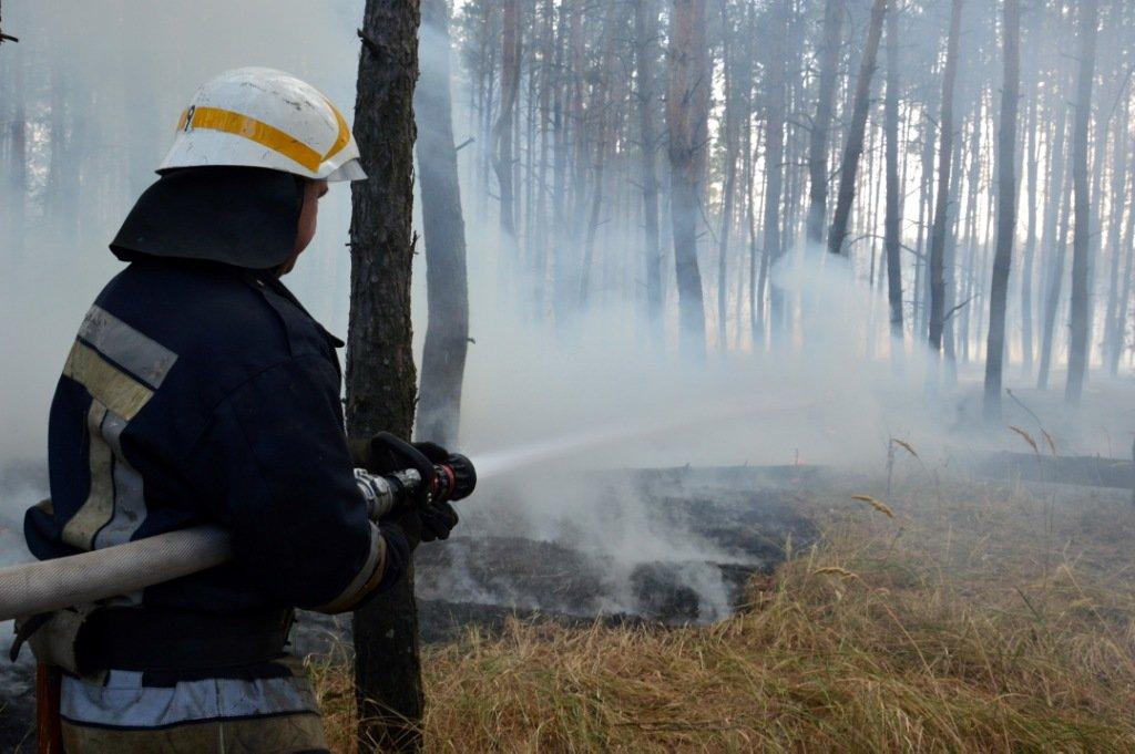 На Днепропетровщине продолжает гореть лес, - ФОТО, ВИДЕО, фото-2