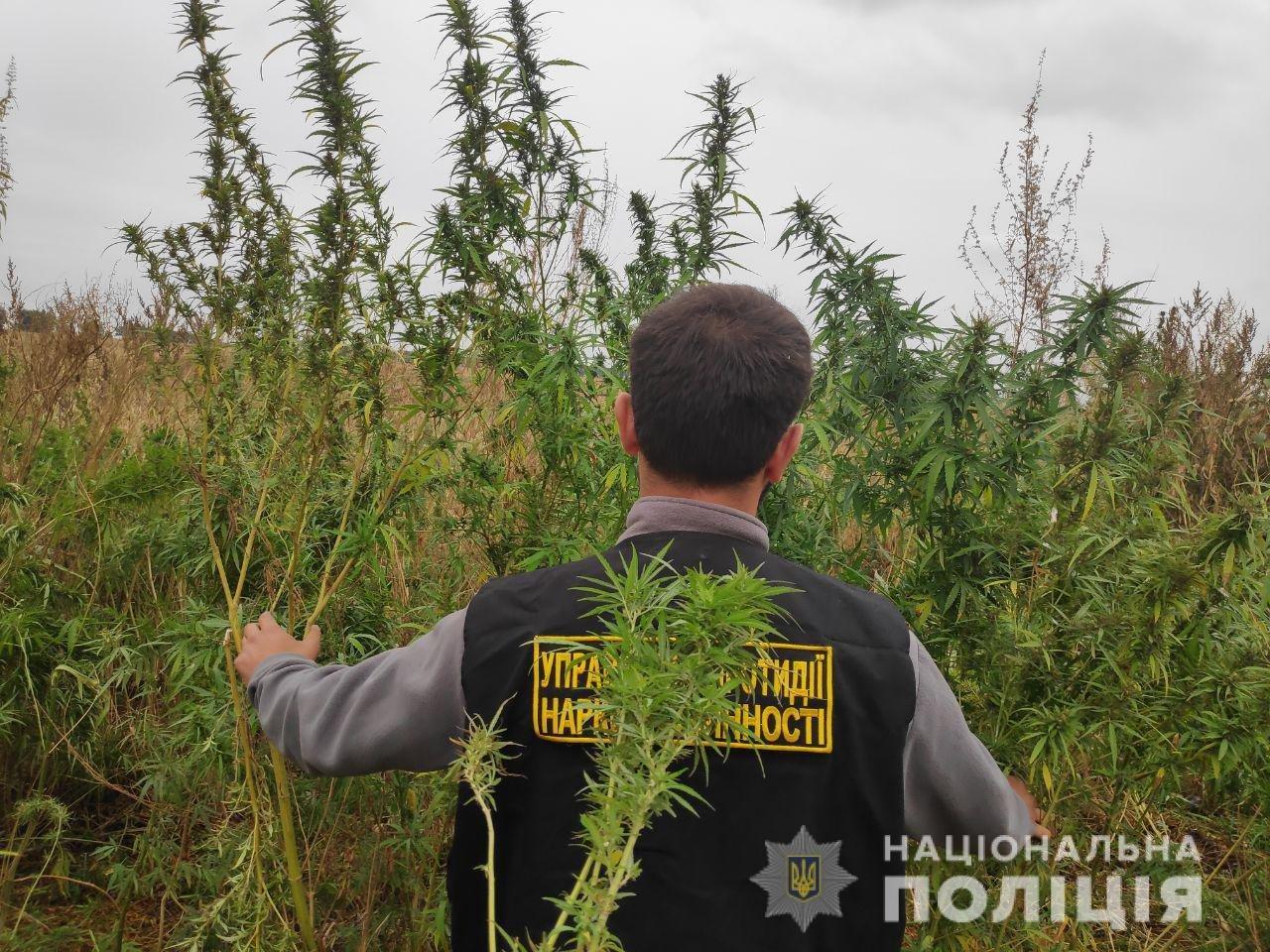 Под Днепром мужчина показал полицейским свой урожай конопли, - ФОТО, ВИДЕО, фото-1