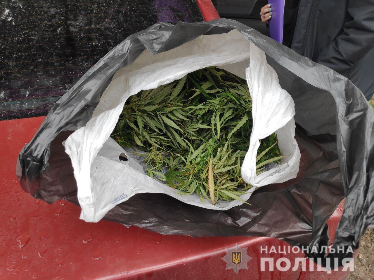 Под Днепром мужчина показал полицейским свой урожай конопли, - ФОТО, ВИДЕО, фото-3
