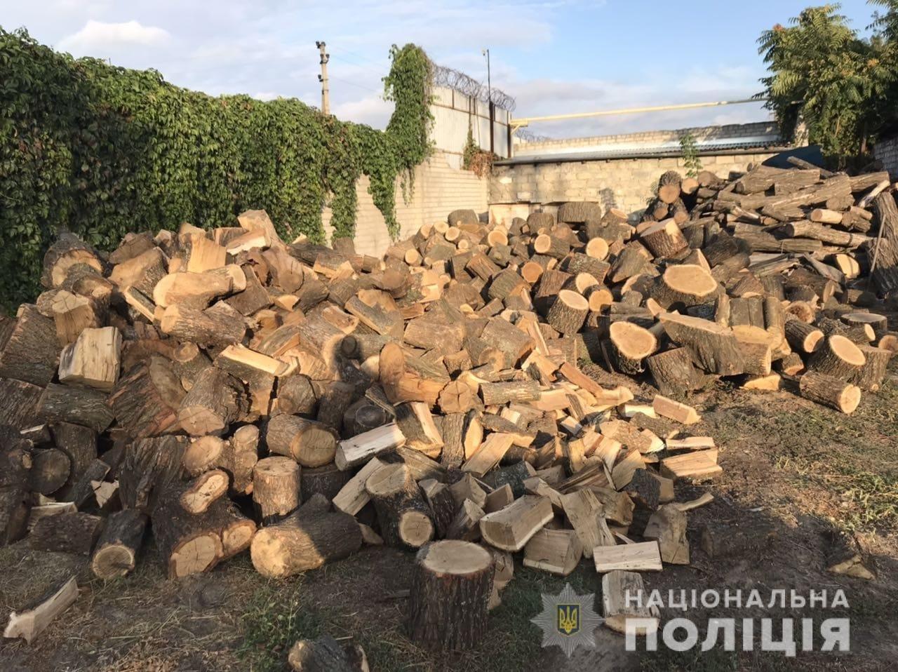 На Днепропетровщине полиция обнаружила очередного дроворуба, - ФОТО, фото-1