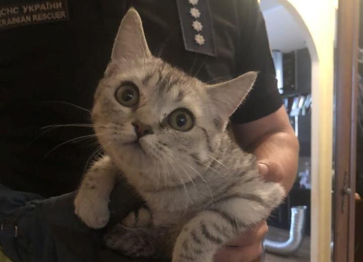 В Днепре дома кот застрял в вентиляционной трубе: его спасали пожарные, - ФОТО, ВИДЕО, фото-1