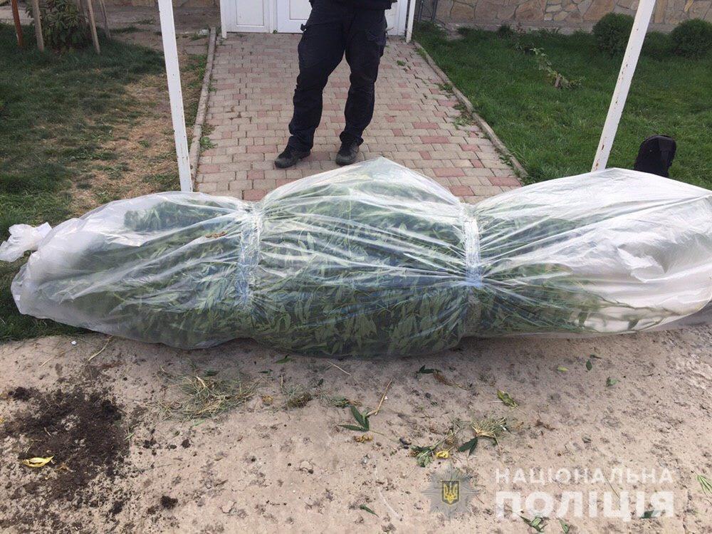 В Днепропетровской области обнаружили плантацию 5-метровой конопли, - ФОТО, ВИДЕО, фото-4