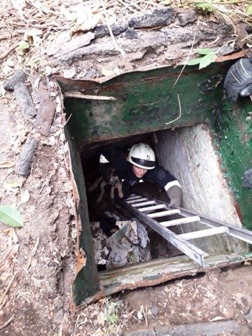 В Днепре из погреба спасатели достали щенка, - ФОТО, фото-1