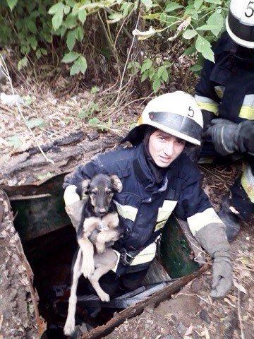 В Днепре из погреба спасатели достали щенка, - ФОТО, фото-2