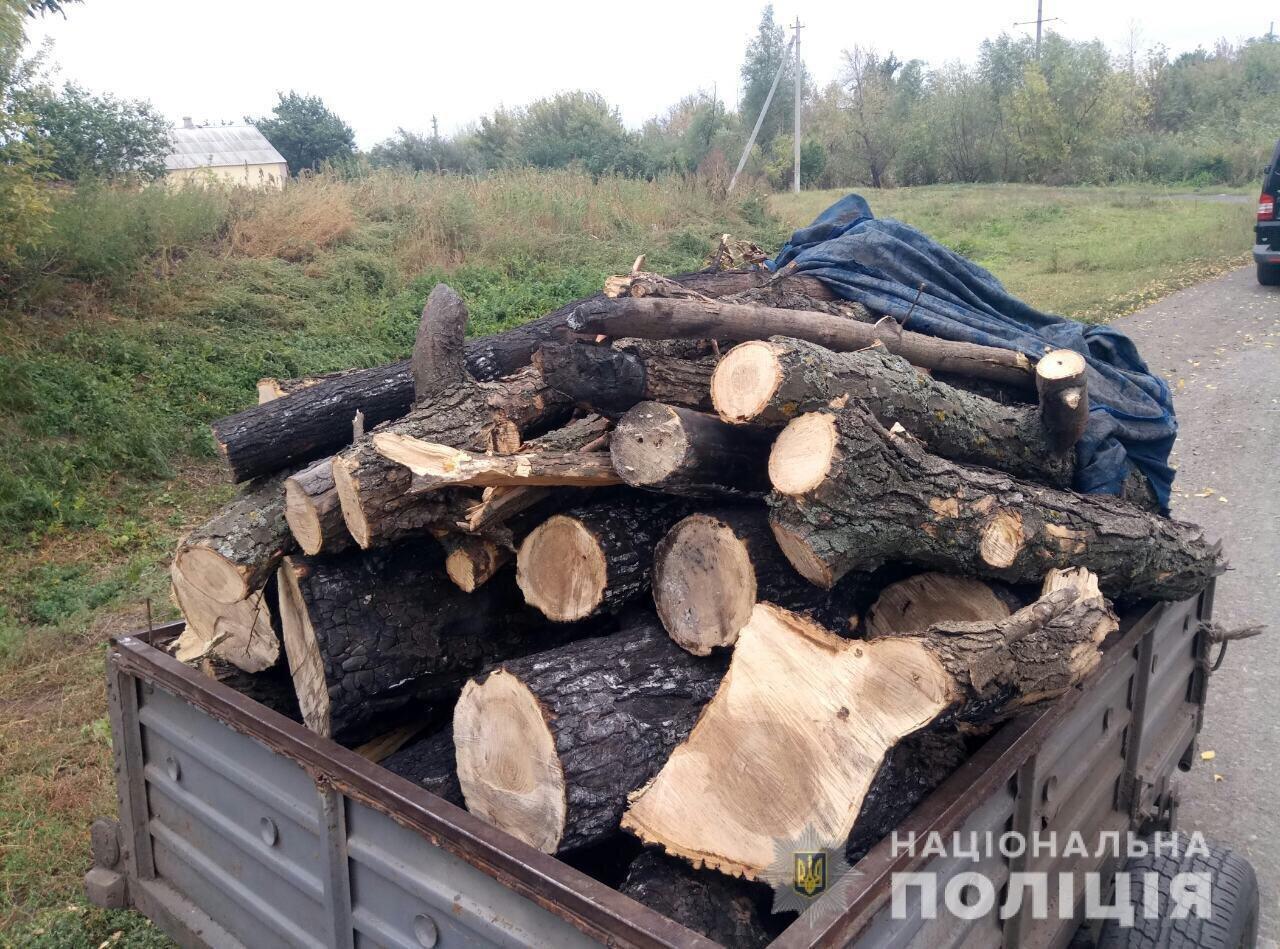 На Днепропетровщине поймали дровосека-нелегала, - ФОТО, фото-1