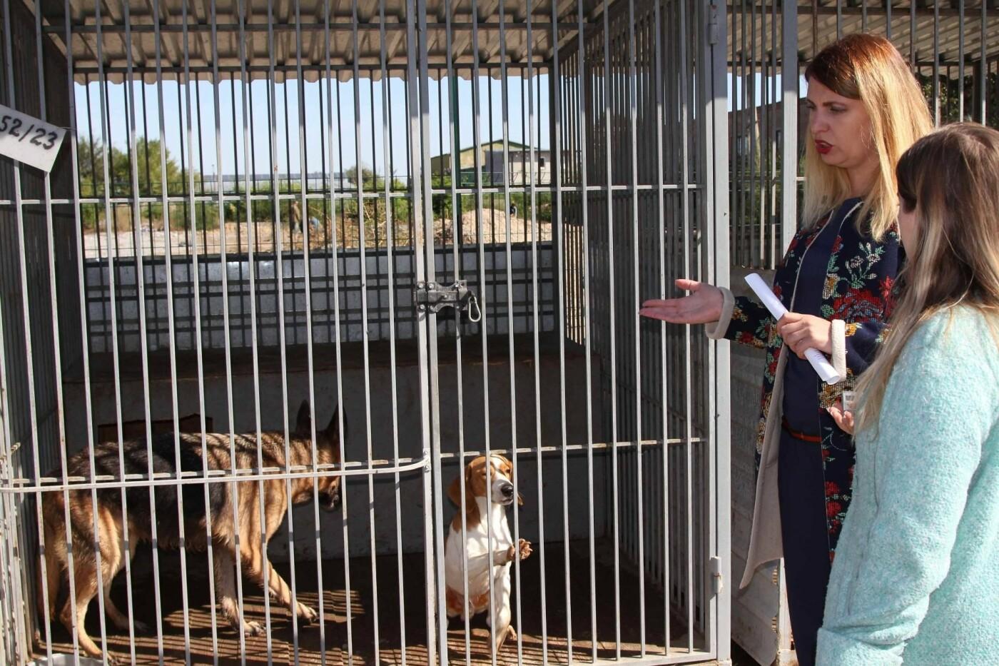 В Днепре за два года значительно сократилось количество бездомных собак , фото-1