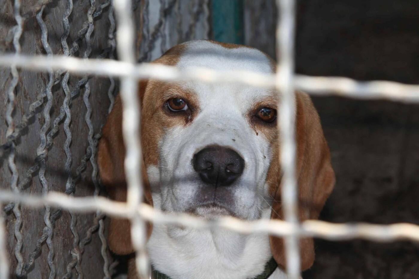В Днепре за два года значительно сократилось количество бездомных собак , фото-2
