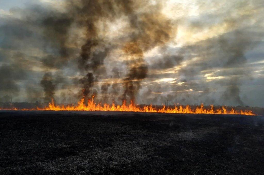 В Днепре возле жилого района горела сухая трава, - ФОТО, фото-2