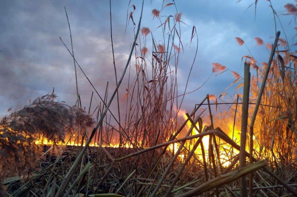 В Днепре возле жилого района горела сухая трава, - ФОТО, фото-1