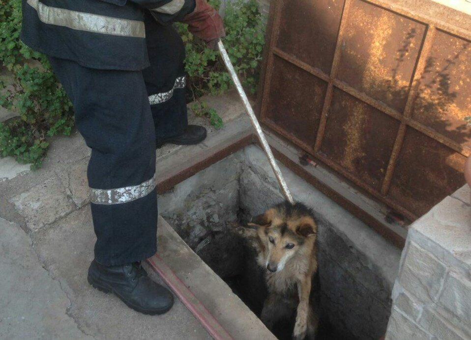 В Днепропетровской области спасли собаку из люка: она была там несколько дней, - ФОТО, фото-1